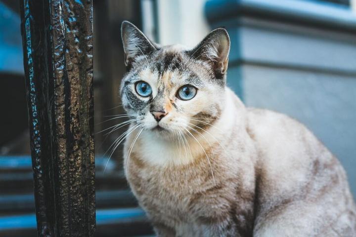 Hauskatzen neigen schnell zu Übergewicht, weil Bewegung fehlt.