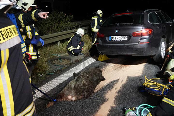 Die Feuerwehr musste den BMW vorsichtig anheben, um das Wildschwein zu bergen.