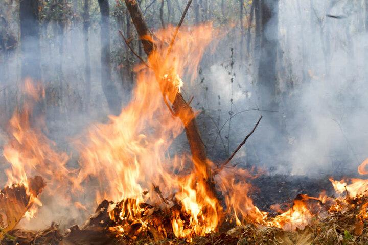Wegen der anhaltenden Trockenheit ist die Gefahr von Waldbränden extrem hoch.