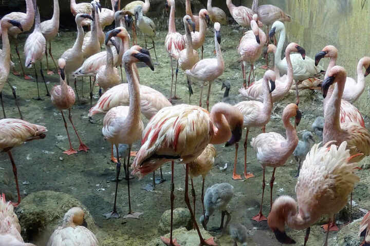 Bei den Flamingos in Leipzig hatte es zuletzt regen Nachwuchs gegeben.