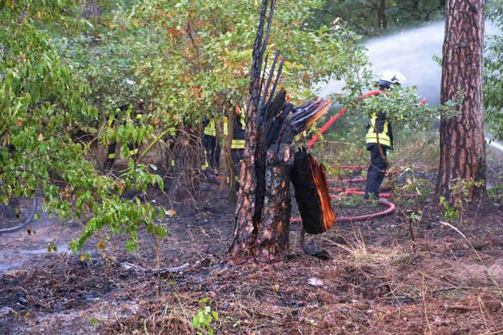 Einige Bäume wurden durch das Feuer in Mitleidenschaft gezogen.