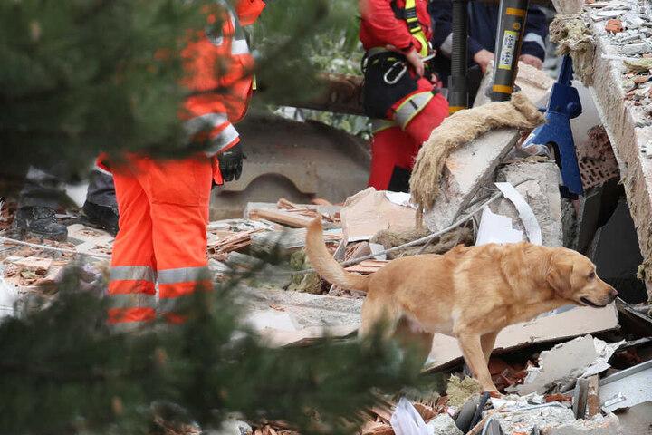 Auch Hunde halfen in Rettenbach am Auerberg bei der Suche nach den Opfern.