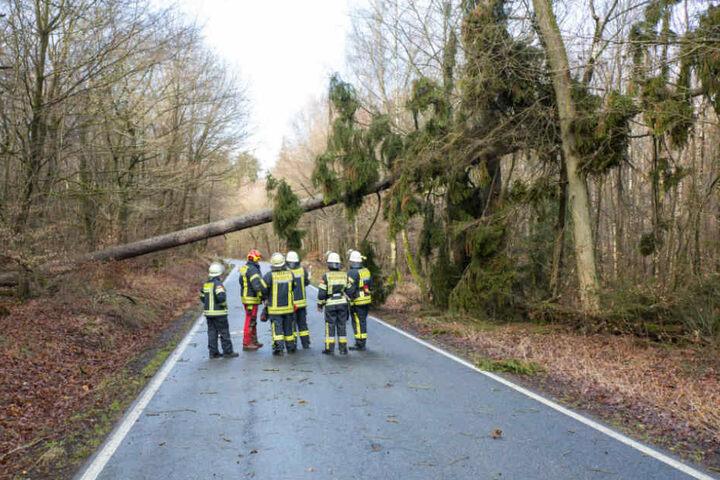 Mehrere Bäumen stürzt in und um Wiesbaden um.