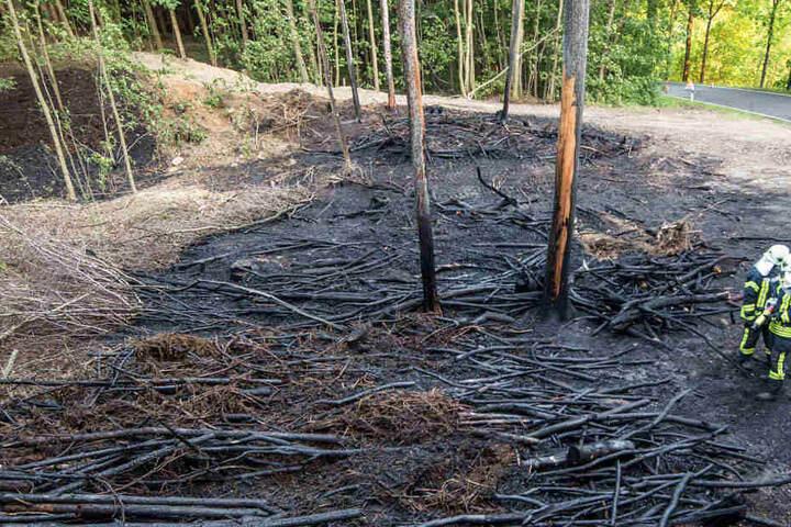 """In den Morgenstunden das verheerende Bild. Dutzende Bäume müssen nun """"notgefällt"""" werden."""