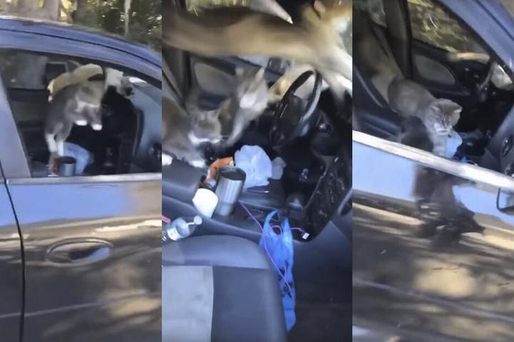 Insgesamt fünf Katzen sprangen wie wild im Auto umher.
