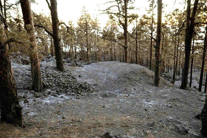Nach dem Feuer war von dem Wald nicht mehr viel übrig. Überall all waren Asche und verbrannte Bäume zu sehen.