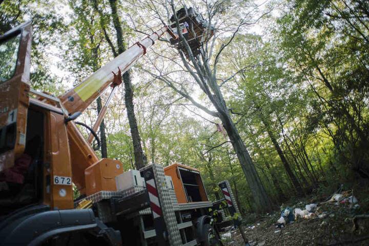 Mit schweren Gerät werden die Baumhäuser geräumt.