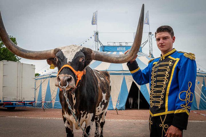 Marlon Schmidt (18) liebt die Zirkustiere - wie das texanische Langhornrind Max.