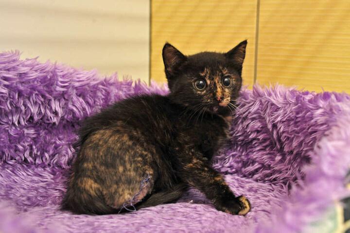 Wegen einer Verletzung musste dieser jungen Katze das Bein amputiert werden. Die Kosten zahlte das Tierasyl.