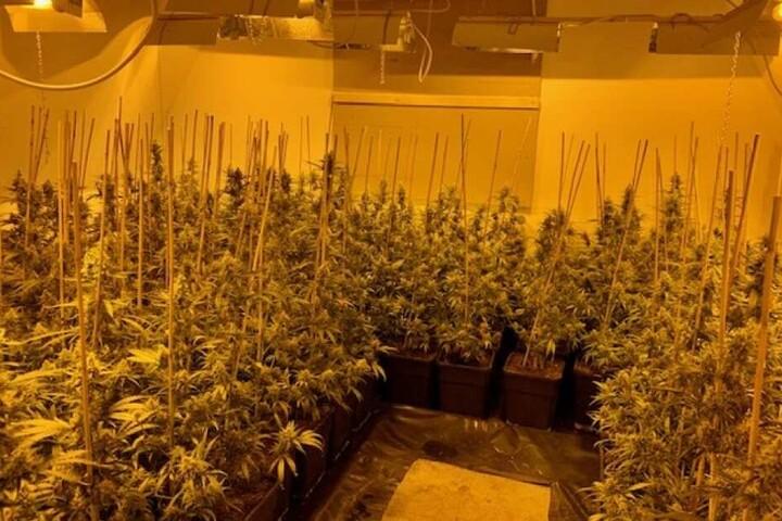 Der Zoll fand eine riesige Drogenplantage.