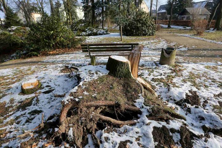 Der Stadtpark in Limbach-Oberfrohna hat unter Sturm Friederike gelitten. Die Schadenssumme beläuft sich auf 10000 Euro. Insgesamt 14 Bäume mussten gefällt werden.