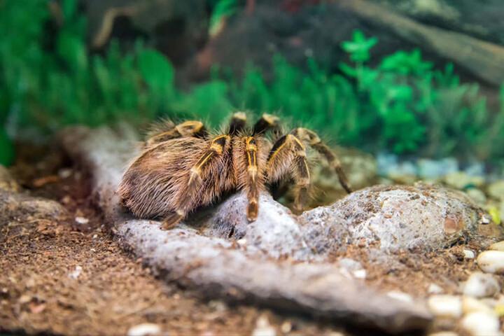 Spinnen sind gar nicht so furchteinflößend.
