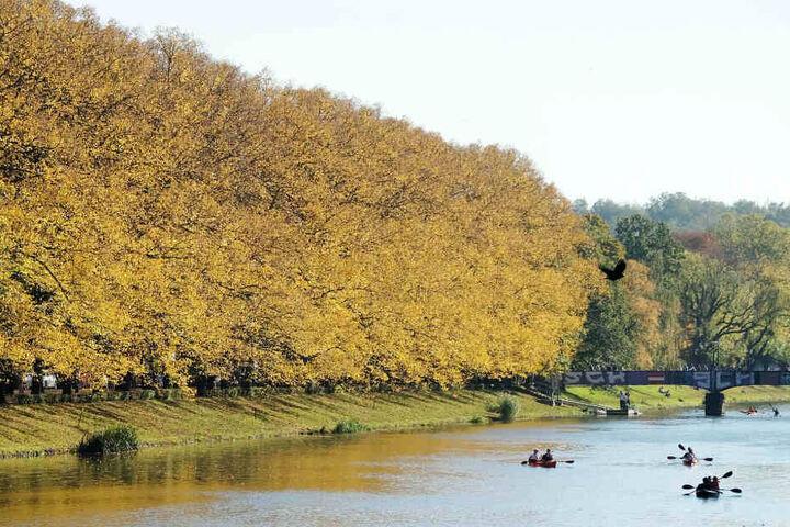 Die Weiße Elster ist für die Leipziger und Besucher auch ein beliebter Fluss zum Paddeln und Rudern.