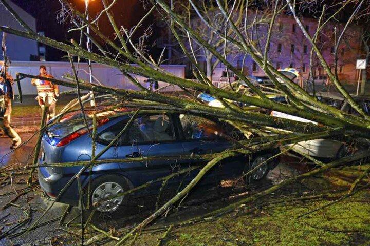 Ein Baum begrub in Bautzen einen Ford Focus und einen Suzuki Liana unter sich.