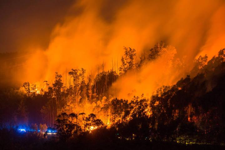 Der verheerende Waldbrand ist der Polizei zufolge durch Blitzschlag ausgelöst worden.