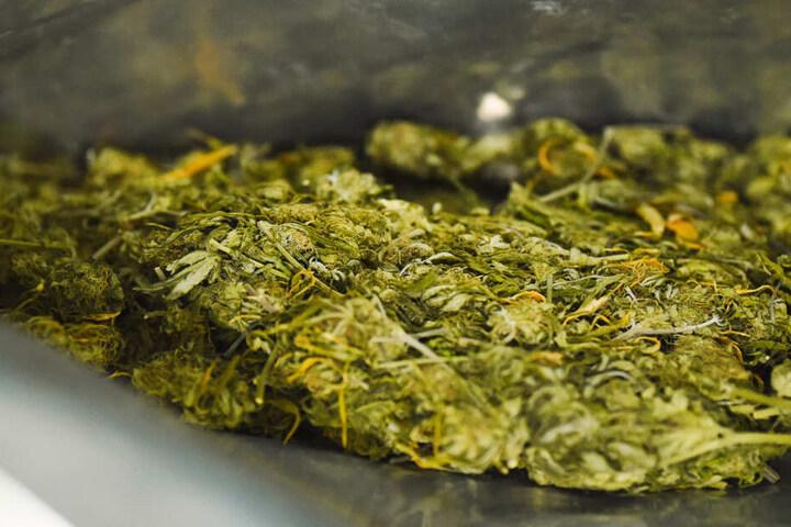 47 Kilo Marihuana stellte die Polizei sicher. (Symbolbild)