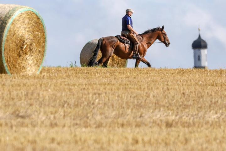 Am nächsten Tag konnte der Mann dann wieder mit seinem Pferd den Rückweg antreten. (Symbolbild)