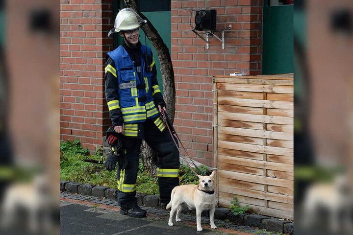 Ein Feuerwehrmann musste zwischenzeitlich auf einen Hund aufpassen.