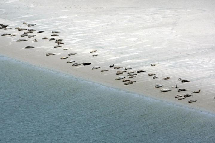 Luftaufnahme: Seehunde liegen im Wattenmeer auf einer Sandbank bei Emden (Niedersachsen).