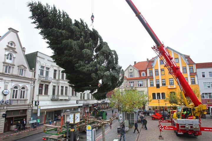 Per Kran wurde der Baum auf den Alten Markt gestellt.