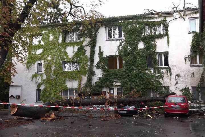 In Darmstadt-Eberstadt krachte ein Baum auf ein Haus sowie ein Auto.