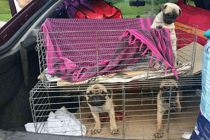 Die Ukrainer wollten die Hunde im Ausland verkaufen, obwohl sie noch viel zu jung waren und wichtige Impfungenfehlten.