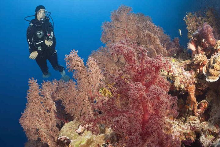 Das weltweit größte Korallenriff sieht atemberaubend schön aus. Doch um diesen Zustand zu behalten, benötigt die australische Regierung Zeit.