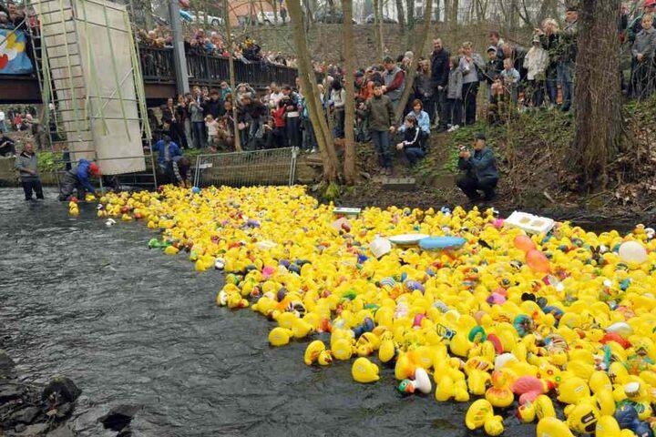 Tausende Enten werden die Gera hinab schwimmen.