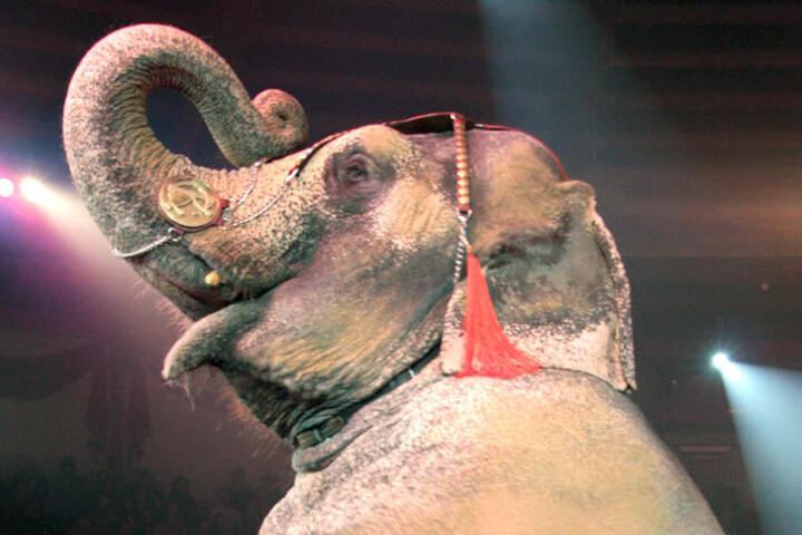 Die Show des Berliner Weihnachtscircus beinhaltet unter anderem Kunststücke mit Elefanten.