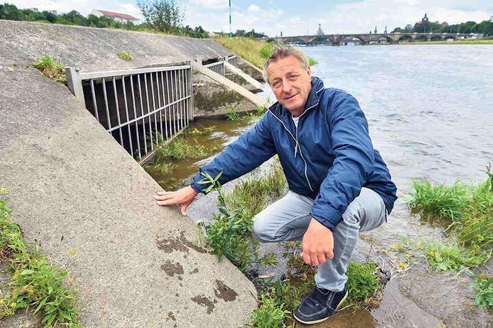 Hier läuft das Abwasser nach Starkregen in die Elbe: Kanalnetzmeister Frank Lieber (57) zeigt  einen der Schachtausgänge. Der Gitterrost schützt die Mündung vor Treibgut und  Bibern.