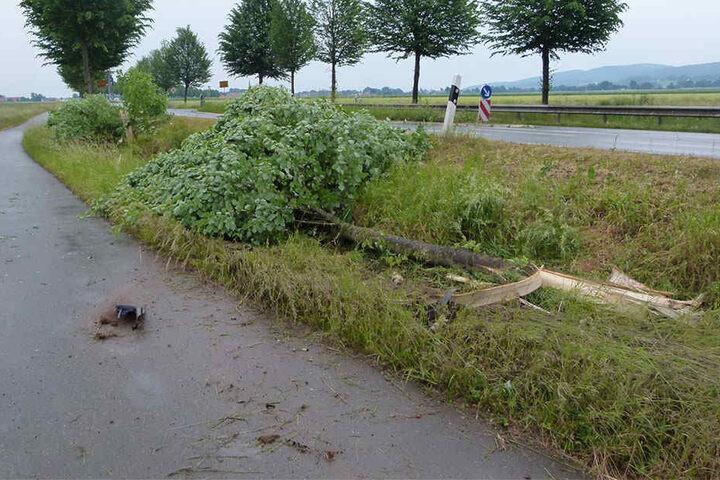 Diese drei kräftigen Bäume durchbrach die Autofahrerin mit ihrem VW Passat.