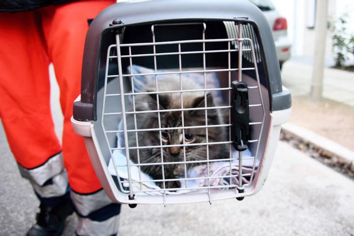 Die Katze wurde in einer Transportbox dem Tierschutzverein übergeben.