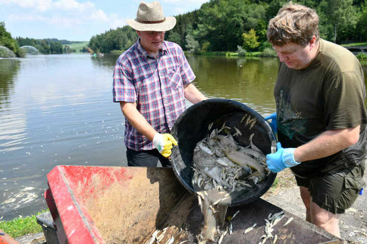 Rund 20 Tonnen Fisch schwammen im Stausee.