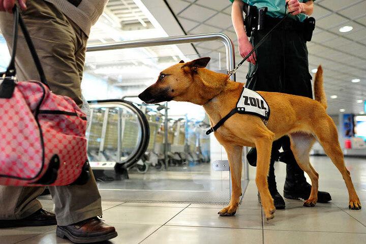 Spürhunde sind eine wichtige Waffe im Kampf gegen Drogenschmuggel.