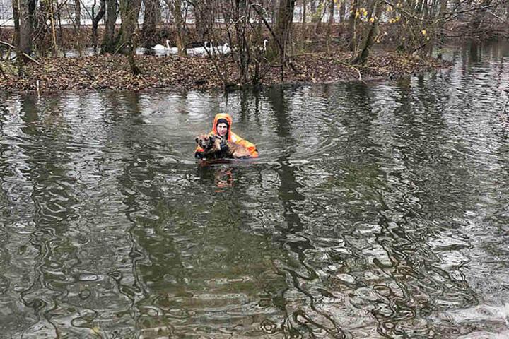 Mit einem Spezialanzug ausgerüstet, wagte sich ein Feuerwehrmann ins Wasser und begab sich zur Insel im Entenweiher.