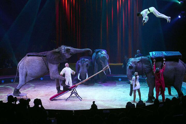 Wird es Elefanten-Shows wie diese in Bad Oeynhausen noch einmal geben?