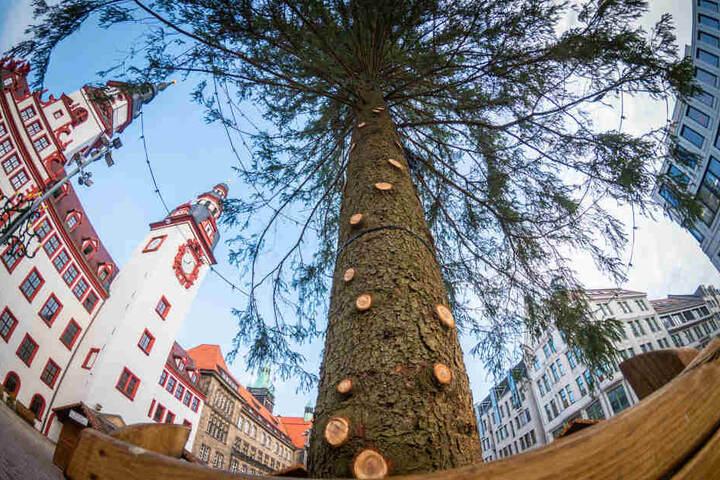 Der Chemnitzer Weihnachtsbaum hatte einige kahle Stellen, weil Äste während des Transportes abbrachen.