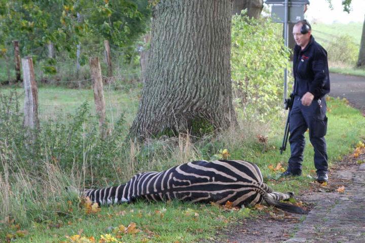 Das Tier wurde mit zwei Schüssen getötet.