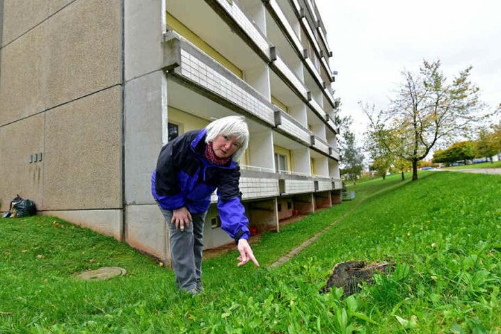 """""""Hier müssen die Katzen vom Balkon geflogen sein"""": Sylvia Meinig (57) machte den entsetzlichen Fund in Hutholz."""