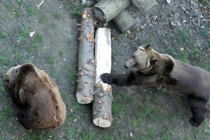 Der Bär ist los! Bea und Benno sind schon aus dem Winterschlaf erwacht.