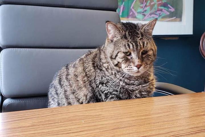 Mr. B sitzt im Chefsessel - er weiß, dass er eine gewichtige Rolle im Tierheim spielt...