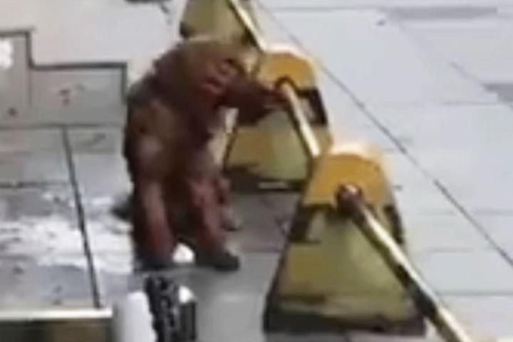 Der Golden Retriever kurz vor seinem Tot.