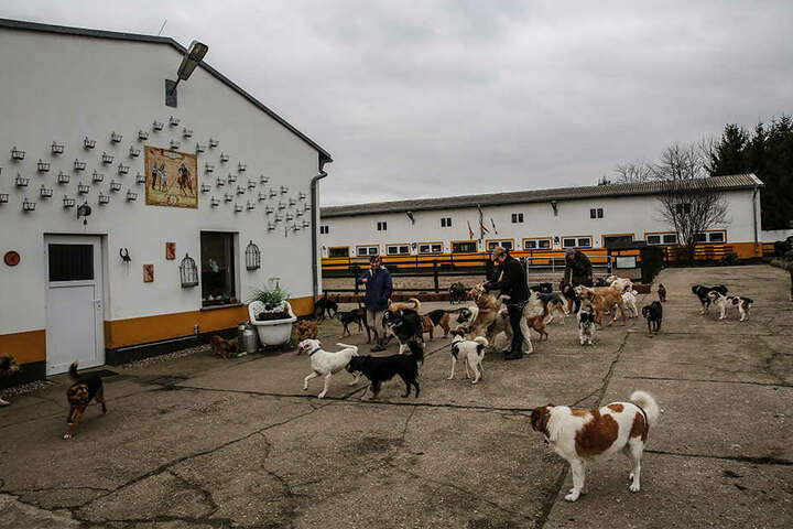 Vierbeiner-Paradies: Auf dem weitläufigen Hofgelände tollen derzeit mehr als 70 Hunde.