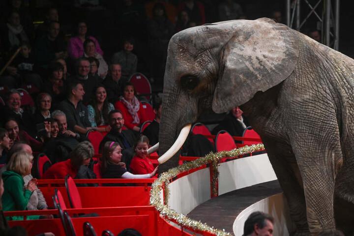 Der Elefant gehört zu den mehr als 50 Tieren, die beim 23. Dresdner Weihnachts-Circus in der Manege zu sehen waren.