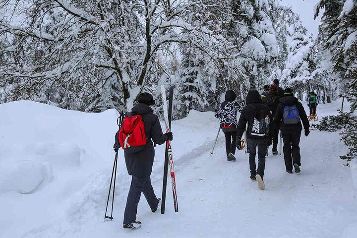 Schneebruch-Warnung? Viele Langläufer ignorierten den Rat des Tourist-Info-Büros Altenberg, gingen trotzdem in den Wald.