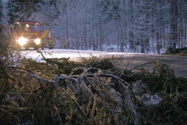 Bäume mussten von der Straße geräumt werden.