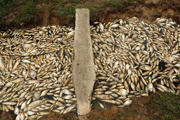 Gift oder niedriger Wasserstoffpegel. Warum starben die Fische?