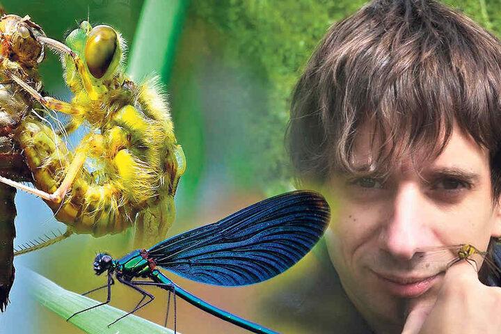 Naturfotograf René Schleichardt (40, re.) Fotografen-Glück: Diese Vierflecklibelle (li.) entschlüpft gerade ihrer Larve. Zurück bleibt nur die leere Hülle.