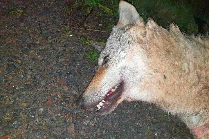 Ein Autofahrer hatte geglaubt, einen toten Hund gefunden zu haben.