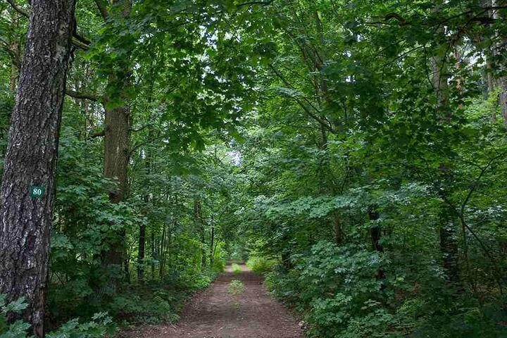Ein toter Forstarbeiter wurde am Donnerstag im Waldstück gefunden (Symbolbild).
